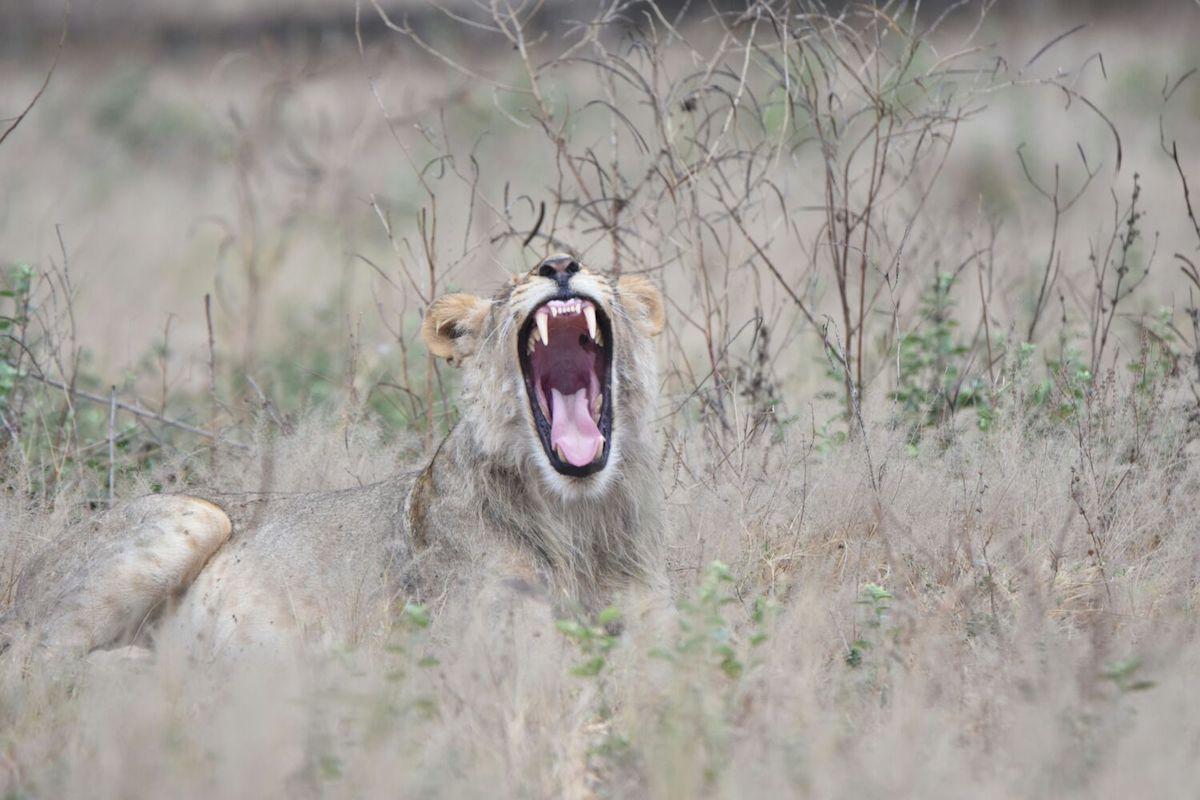 leone_zimbabwe_big5_safari_lyon_manapools_hwange_africa