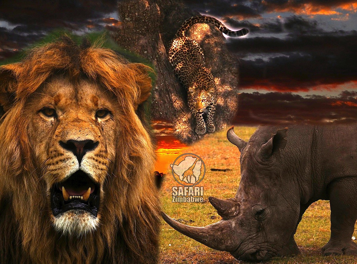 zimbabwe_safari zimbabwe_africa_big5_safari_animali africani_alessio delle cave_botswana_leone_rinoceronte_leopardo