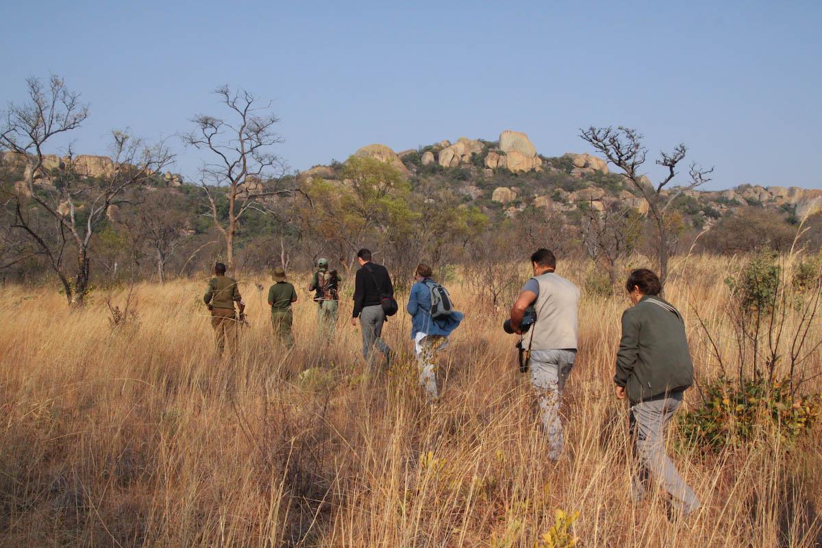 camminare_walking safari_safari a piedi_zimbabwe_safarizimbabwe