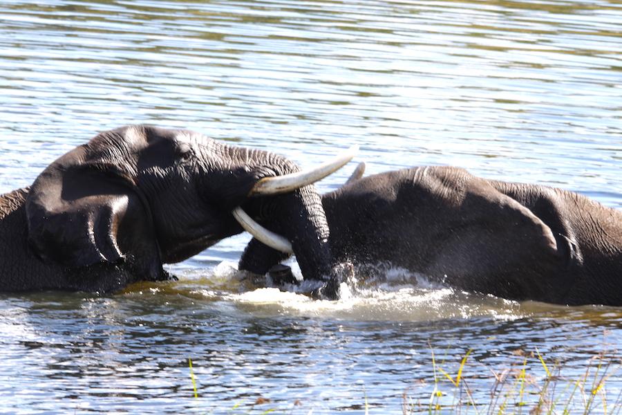 01 il bagno degli elefanti