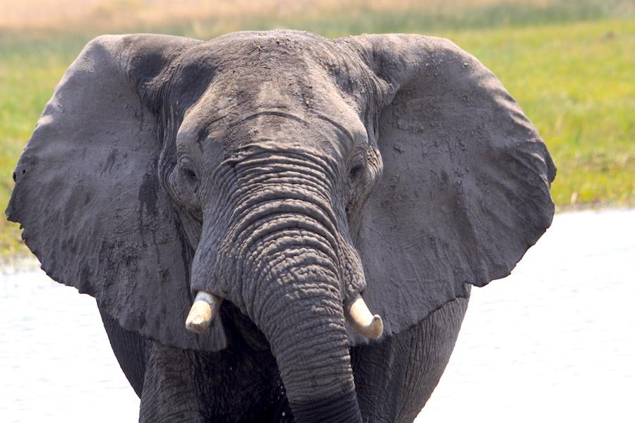 02 elefante primo piano