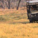 il safari in africa quale scegliere? Dove andare?